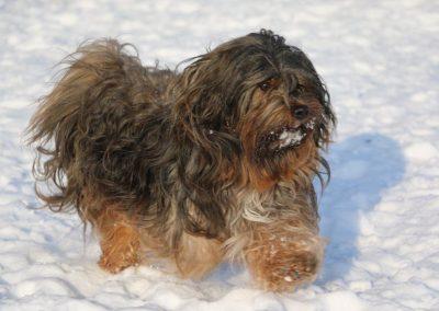 Kasper in de sneeuw